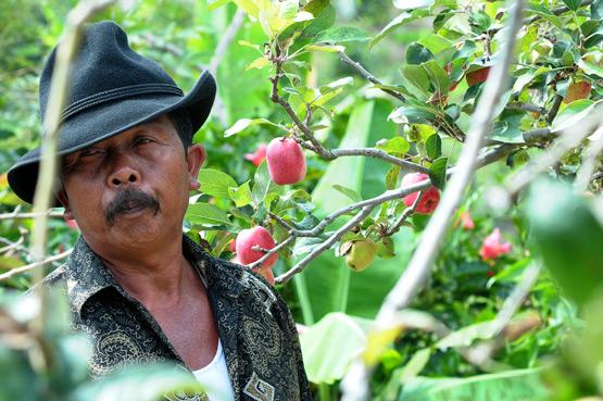 Ilustrasiku Petani Pohon Apel Sebuah Desa Damai Tentram Tinggallah Keluarga
