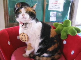 2 Kucing Misterius di Dunia Yang Fenomenal - infoinfo unik