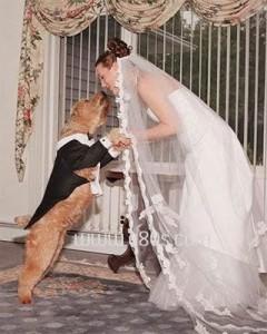 Wanita Ini Menikah Dengan Seekor Anjing