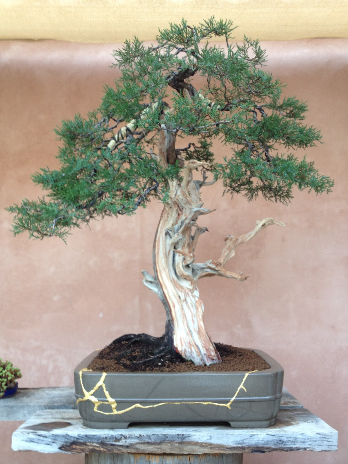 Fkb escuela bonsai mallorca recadero bons i contempor neo for Simultaneo contemporaneo