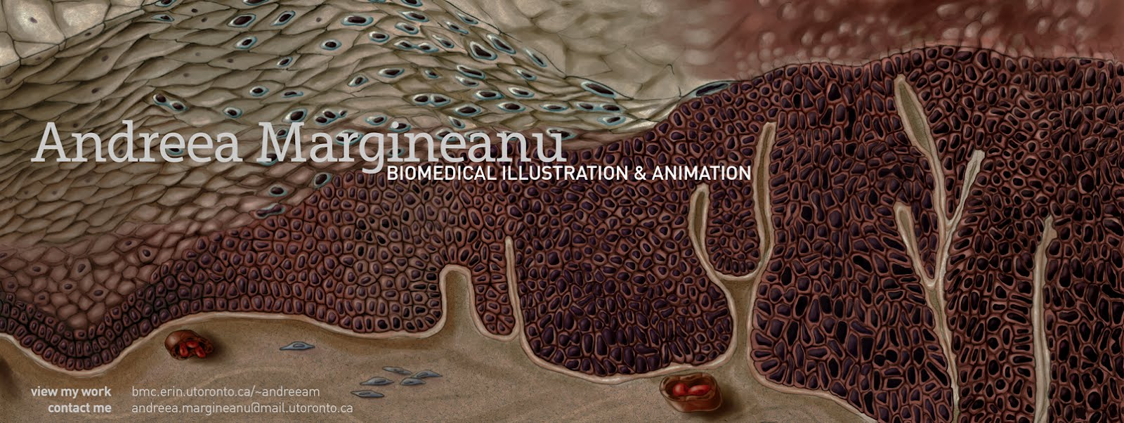 andreea margineanu: biomedical illustration and animation