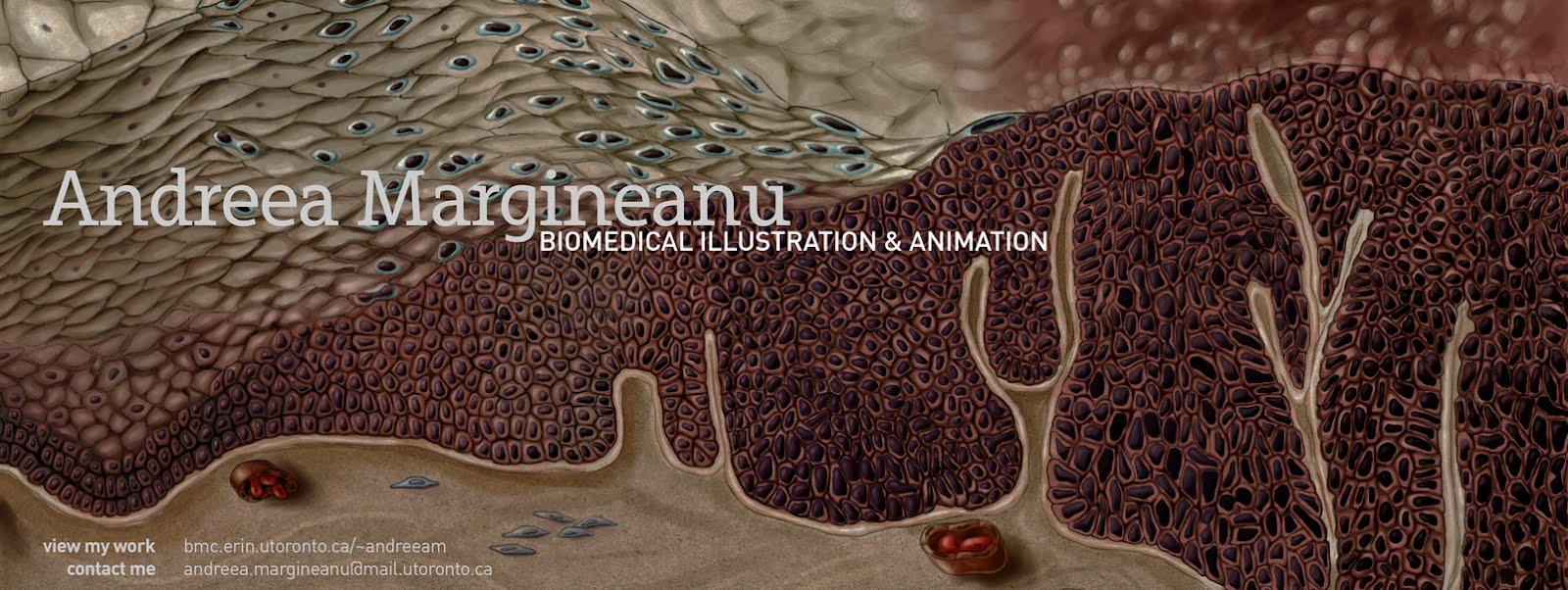 andreea margineanu: biomedical illustration and animation