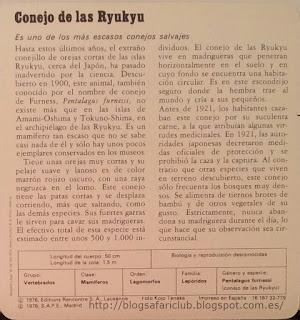 Blog Safari Club, características del Conejo de las Ryukyu