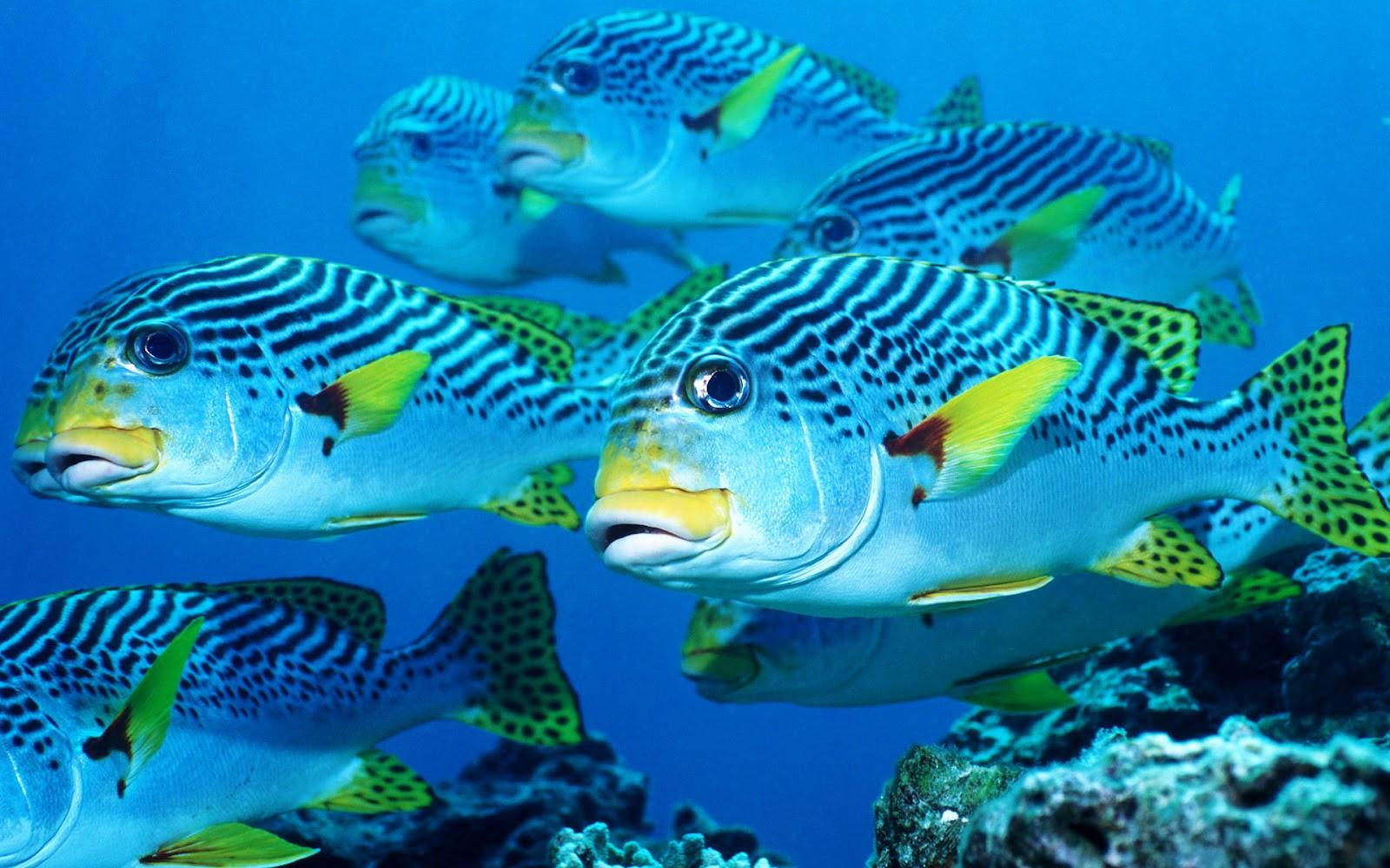 Onderwater foto... Underwater Plants