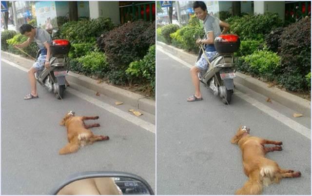 anjing diseret pakai motor