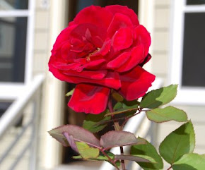 Our Rose Marie, Our Flower in Heaven