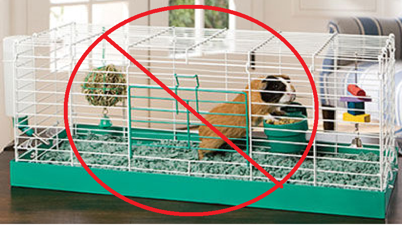 Pet lover times choosing the right cage for your guinea pig for Wire guinea pig cages