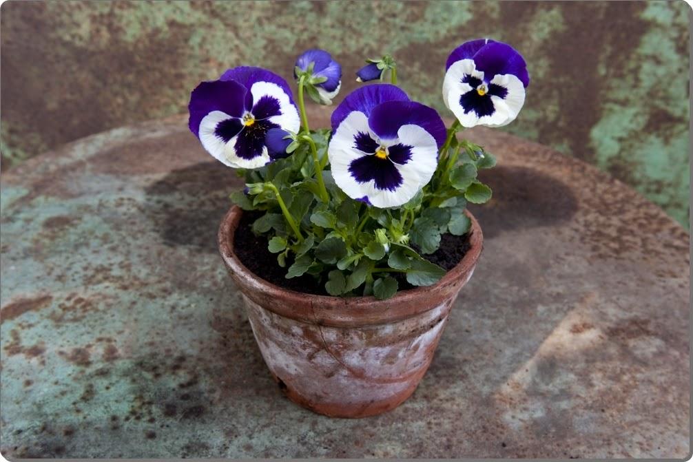 Cvijeće koje možete da sadite u aprilu - Moj Vrt Cvijeća
