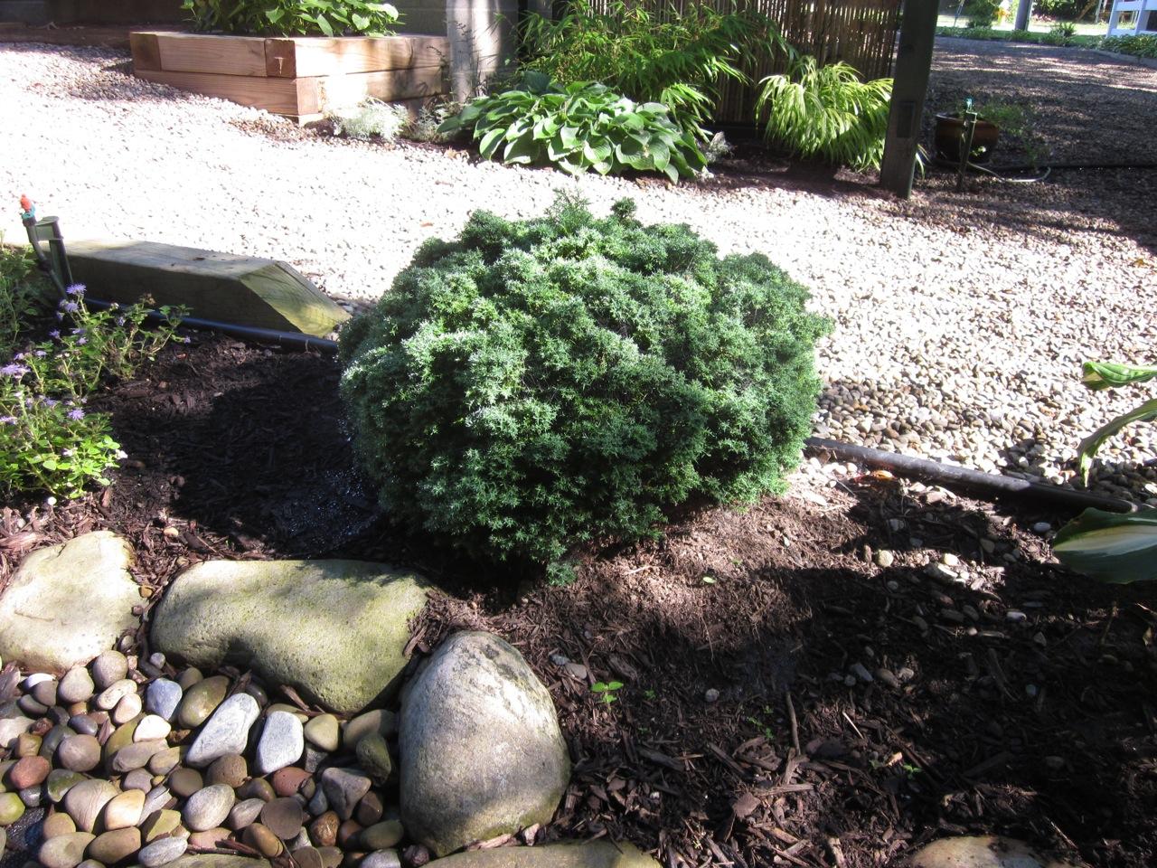 My Zen Garden Plants 2009