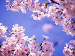 las flores del almendro y el cielo