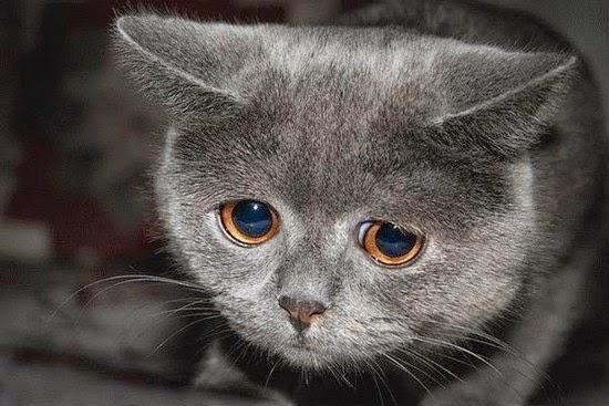 Gambar Sedih Kucing Galau Menangis