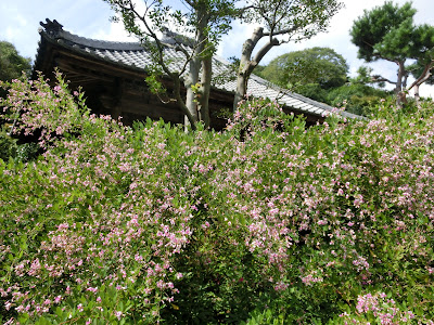 海蔵寺のハギ