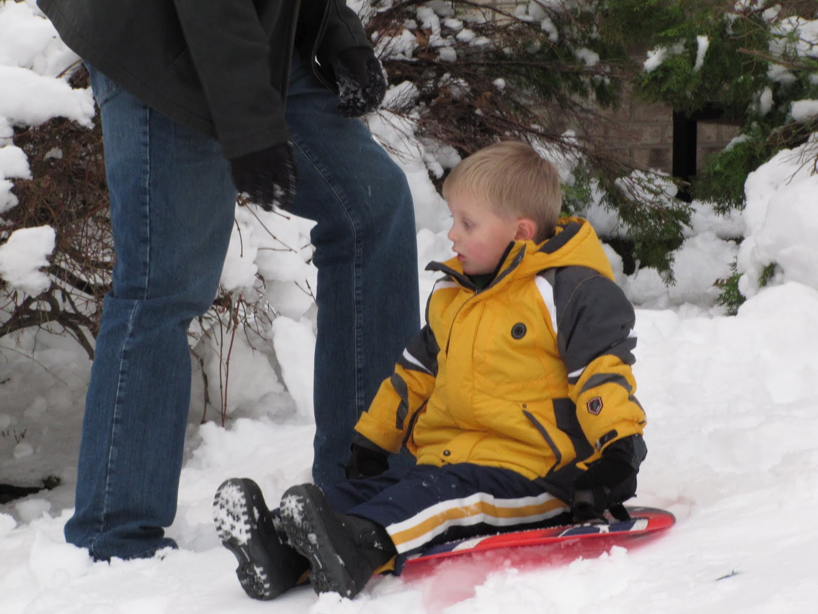The Gregor Family: Sledding in the front yard- January 28