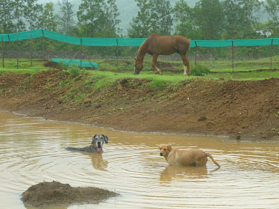 dogs enjoying in the rain water