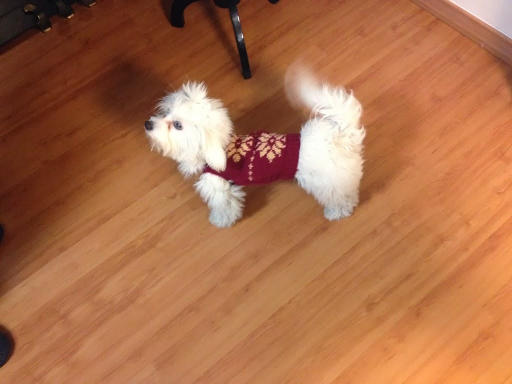 Botones: Tutorial: Ropa tejida a dos agujas para perro