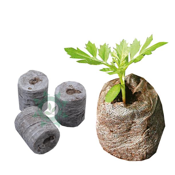 Green Power | Célula de Germinação Jiffy