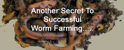 Marketing and successful worm farming business