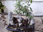 Bonsai tray. Mountains surrounded by water