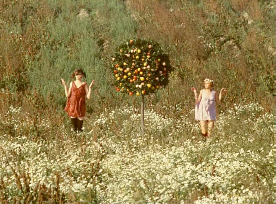 Parachutesaway Daisies The Most Marvelous Film Almost Ever