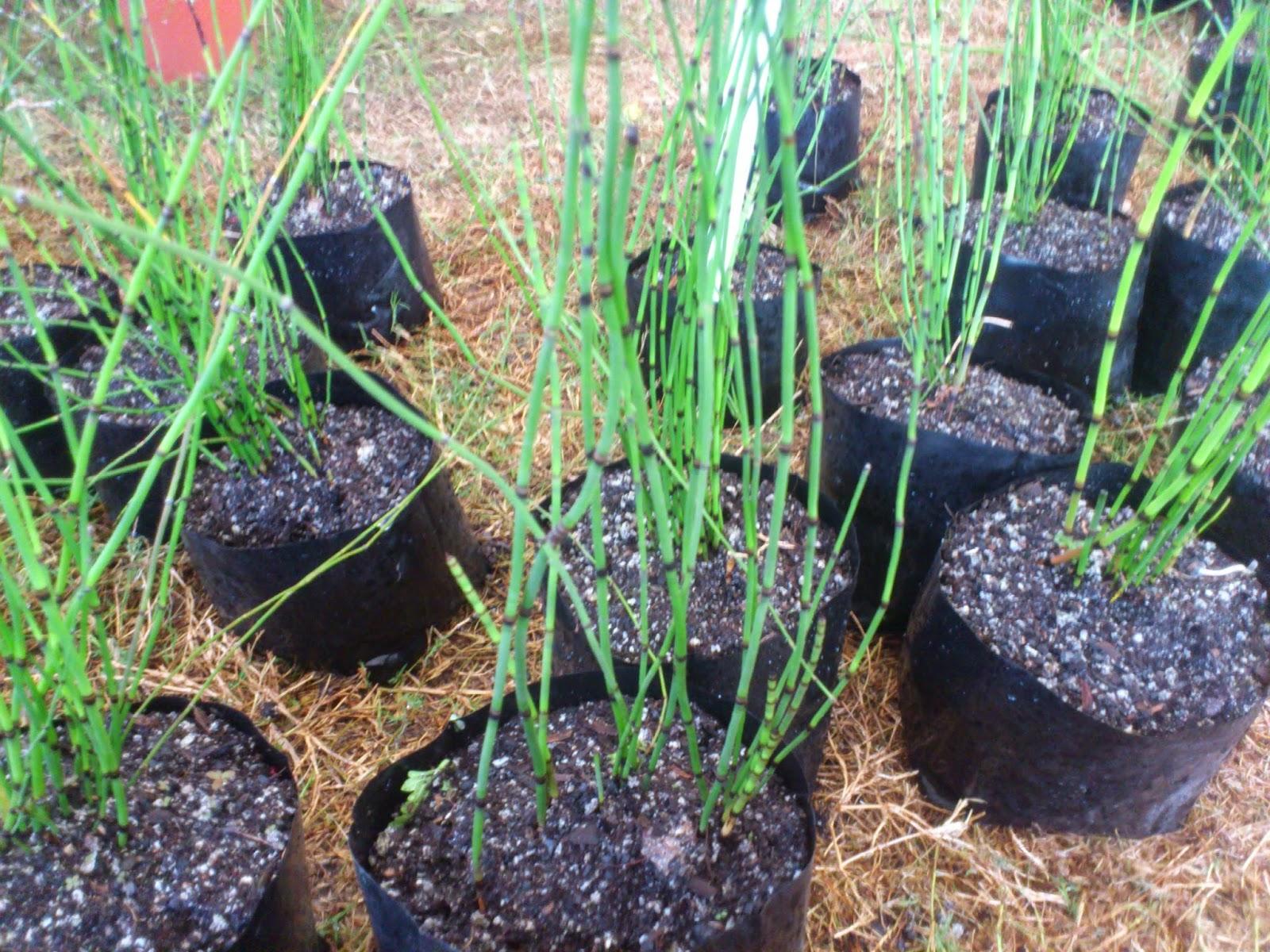 Bonsai salon de la maison et du jardin 2014 hedge for Bonsai de jardin