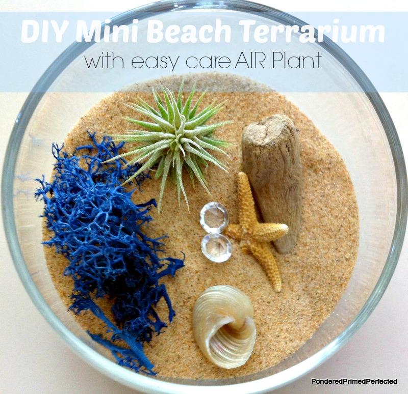 Pondered Primed Perfected Diy Mini Terrarium Beach Inspired With