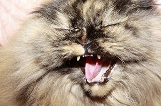 Reaksi Kucing Jika Menonton Film Yang Menakutkan
