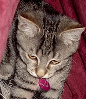 gato secuestrado por mujer despechada