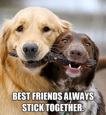 Best dog friends always stick together. Two dogs sharing a stick.