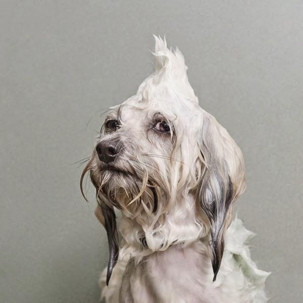 perros a la hora del baño
