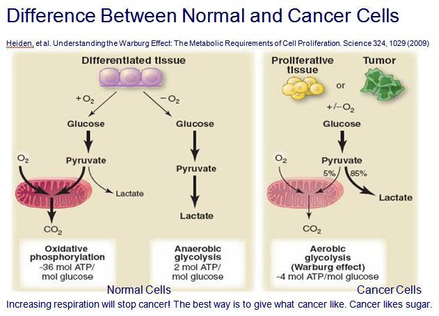 basic biology of cancer erythrose vs cancer. Black Bedroom Furniture Sets. Home Design Ideas