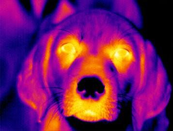 Pesquisa traz diagnóstico: os pets são felizes com os seus donos?  (Foto: Divulgação/Nestlé)