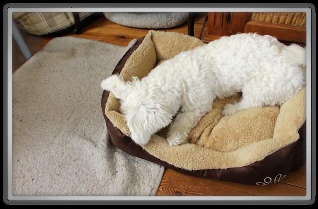 EtudeHouse2012 Mega Epic Etude House Super Haul Review Goodies kawaii cute pink ebay jofee maltese puppy dog