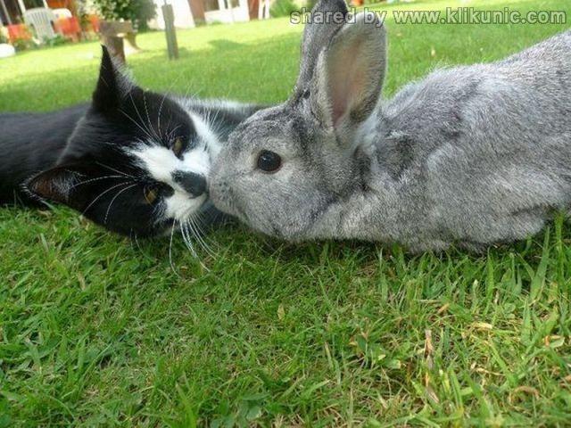 http://4.bp.blogspot.com/-XFWZp2pQgoY/TXzG0-xWfnI/AAAAAAAARGg/WOp0JooONLI/s1600/these_funny_animals_635_640_38.jpg