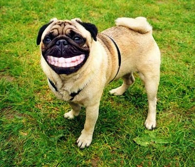 HD Animals: cartoon dog smiling