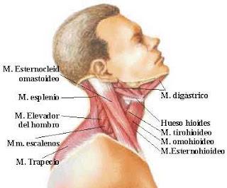La quiropráctica al dolor en los riñones