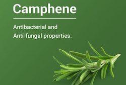 Understanding Camphene