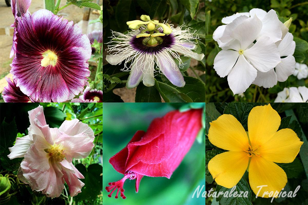 naturaleza tropical plantas ornamentales con propiedades