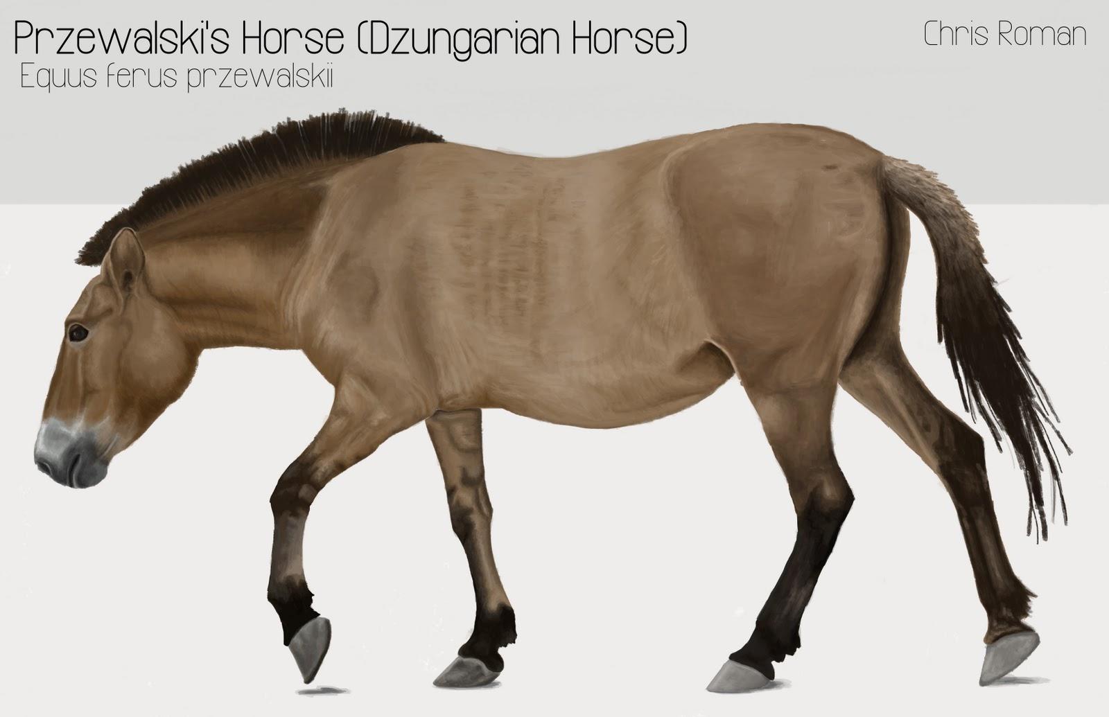 Chris Roman: Horse Anatomy Study