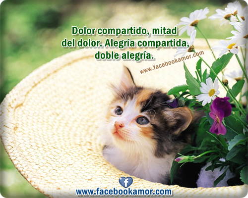 Imágenes bonitas de amistad para facebook | Imagenes de Amor Facebook