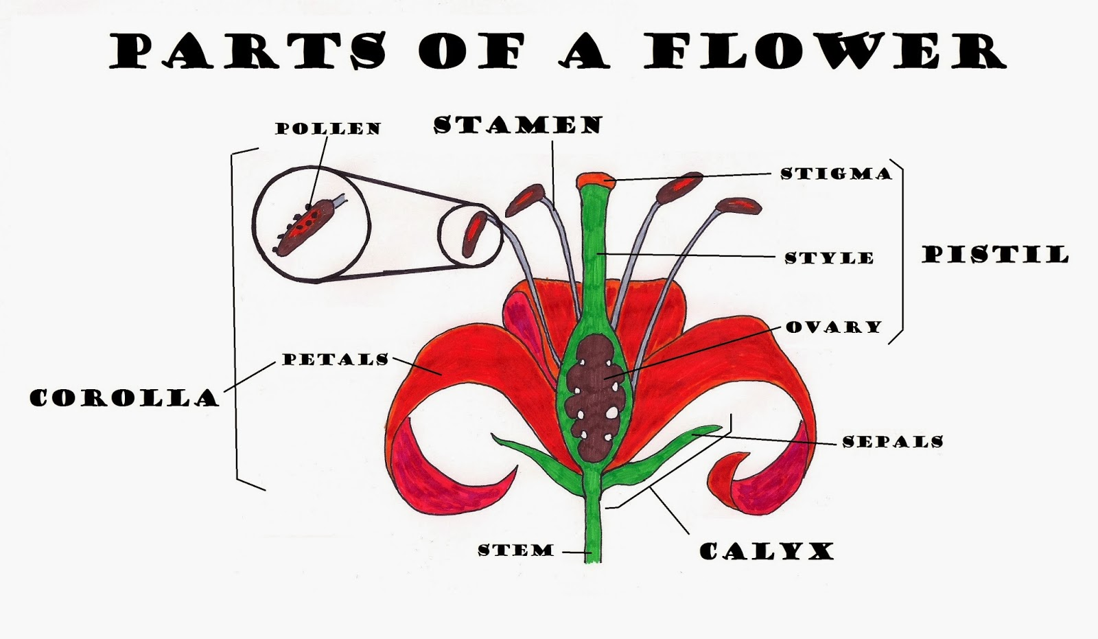 SCIENCE BLOG YEAR 4 PLANT REPRODUCTION FLOWERS