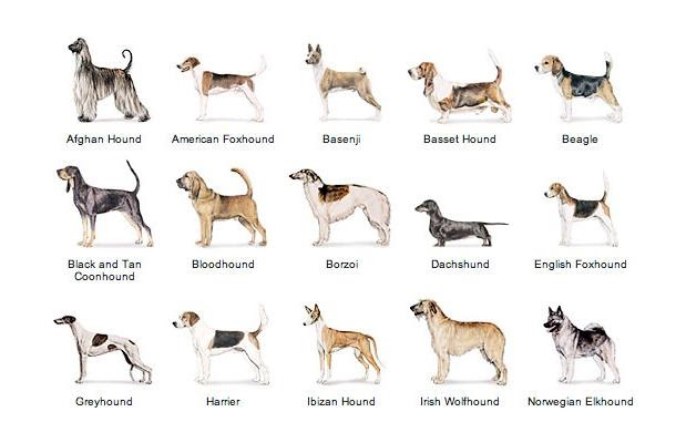 Dog site popular hound dog breeds for Different types of puppies breeds