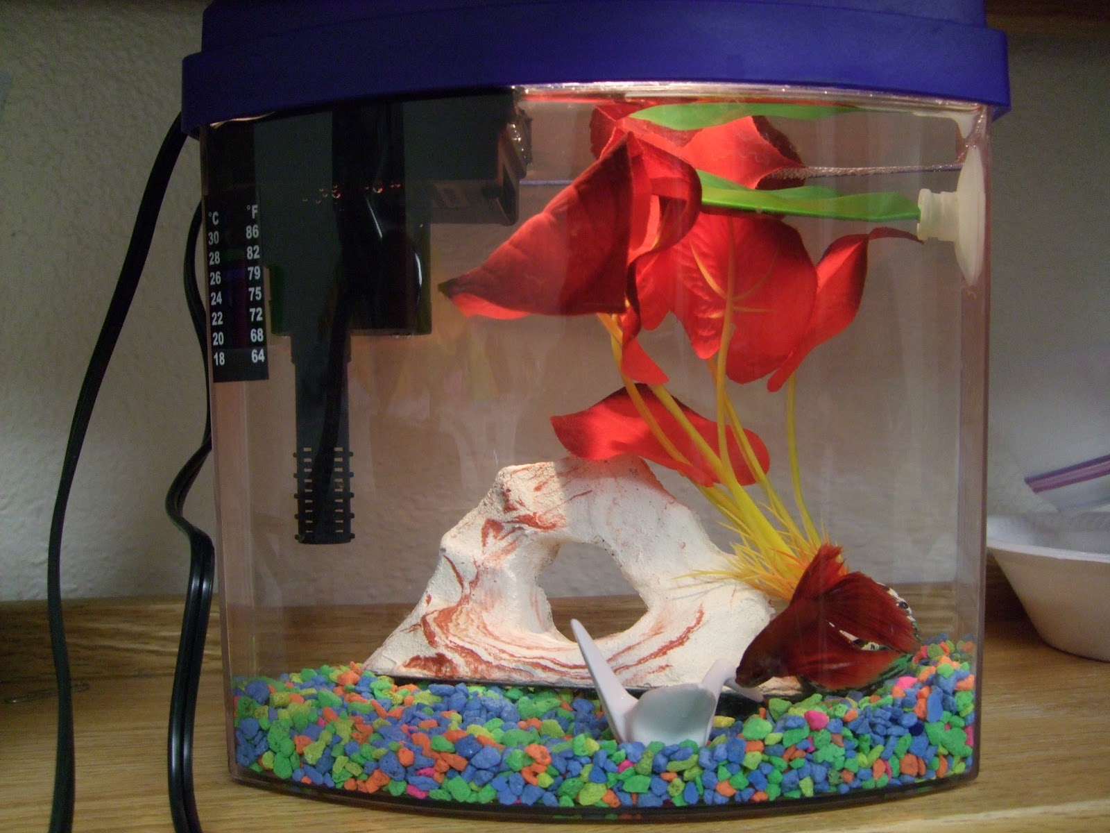 betta fish named alpha alfie for short and got him a cute tank with a plant a cave loop and a leaf hammock  edward gave me one of his silk plants    123 you   me  one of the best weeks i u0027ve had in a while      rh   123youplusme blogspot