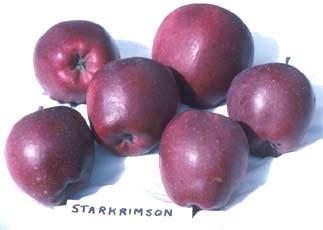 STARKRİMSON