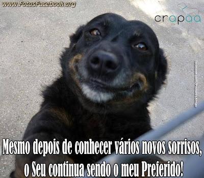 Imagens fofas de Animais para o Facebook