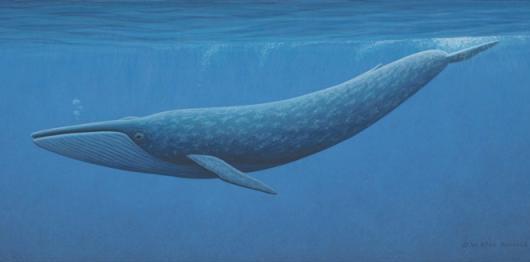 ballena azul - photo #21