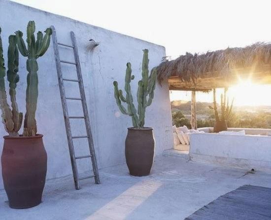Ecminteriorismo decorando con rboles y plantas cactus for Cactus de exterior