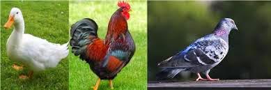 contoh hewan bertelur, gambar hewan, hewan ovipar