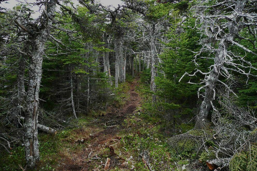 Пугающий и таинственный лес