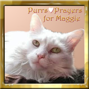 Purrs and Prayers for Maggie
