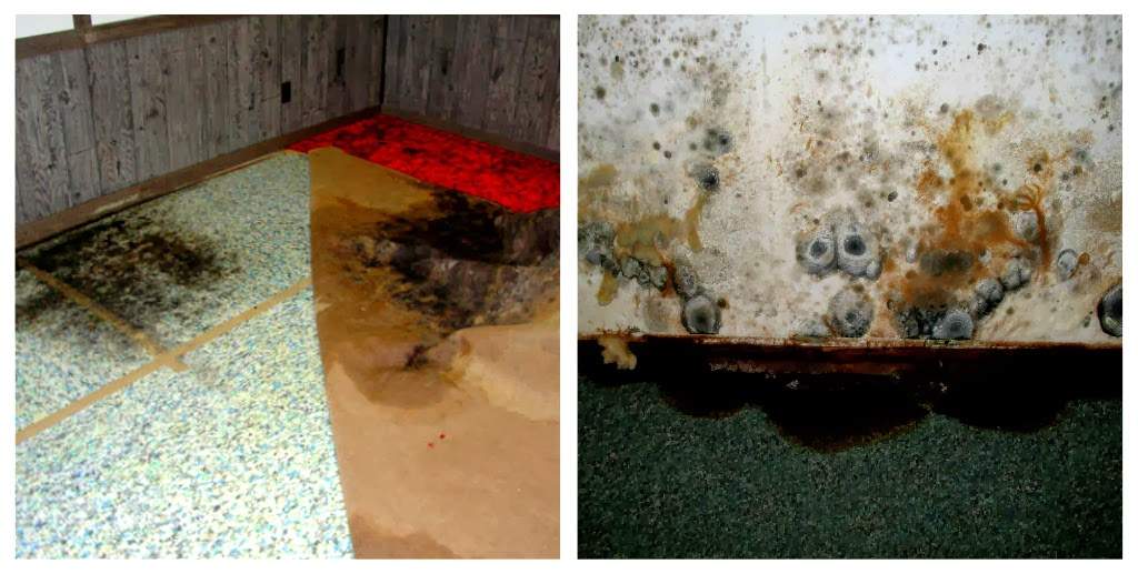 Mould - Water Damage Canberra - Classique ChemDry
